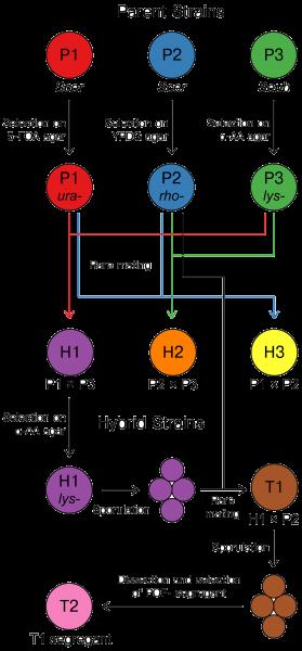 Figure_1_trans