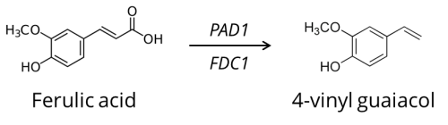 ferulic_4vg